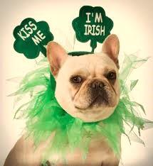 Irish dog.jpg