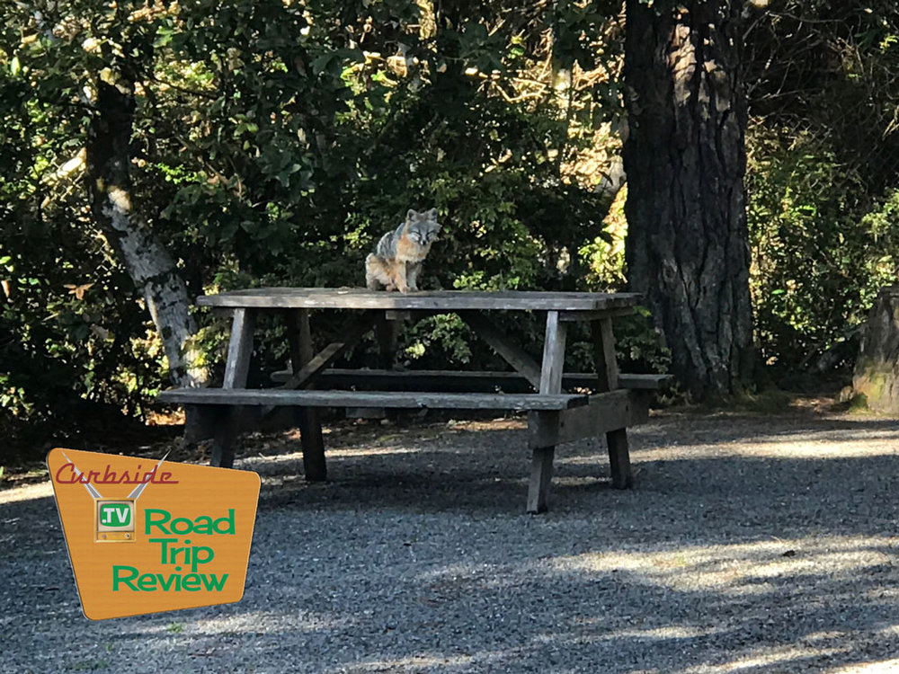 Spotting a fox in the campground is one of the many reasons we love RVing. You get close to nature. And nature wants a snack (but we didn't oblige).