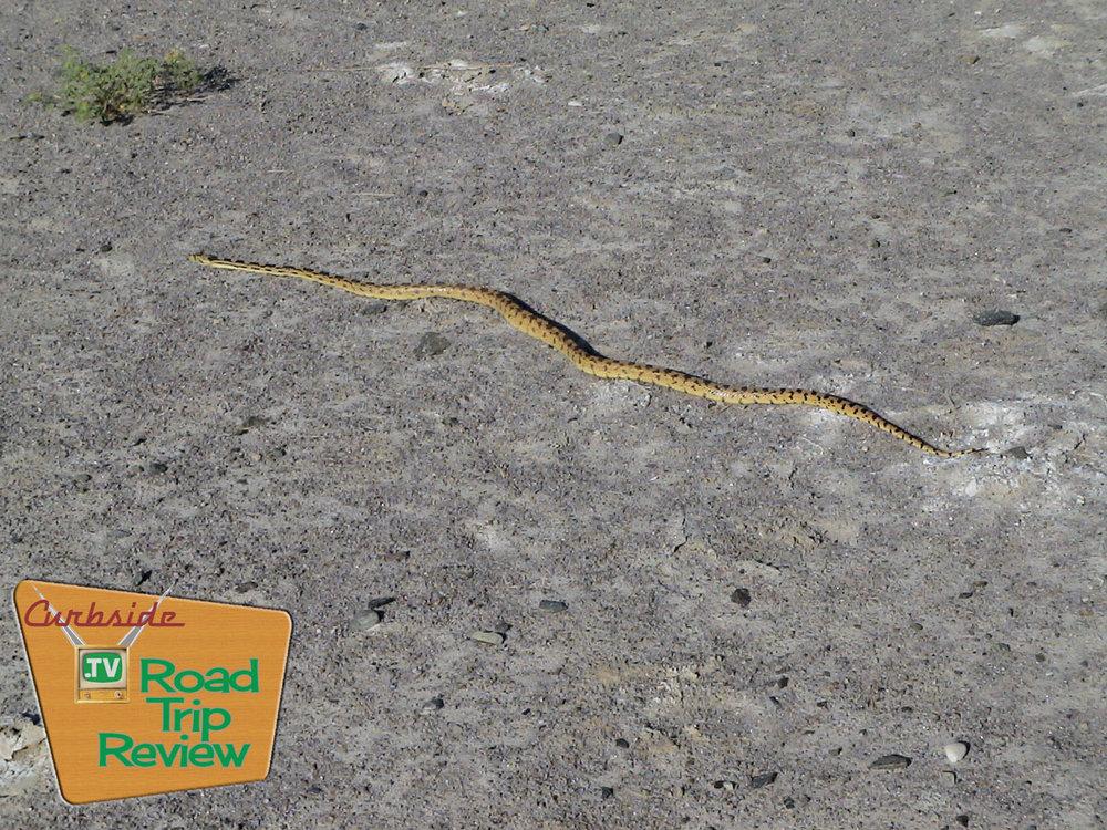 Zzyzx-snake.jpg