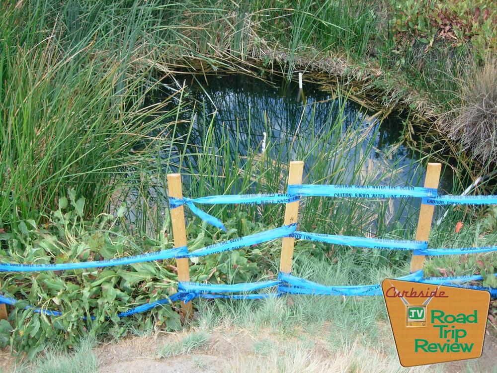 Zzyzx-tule-pond-2.jpg
