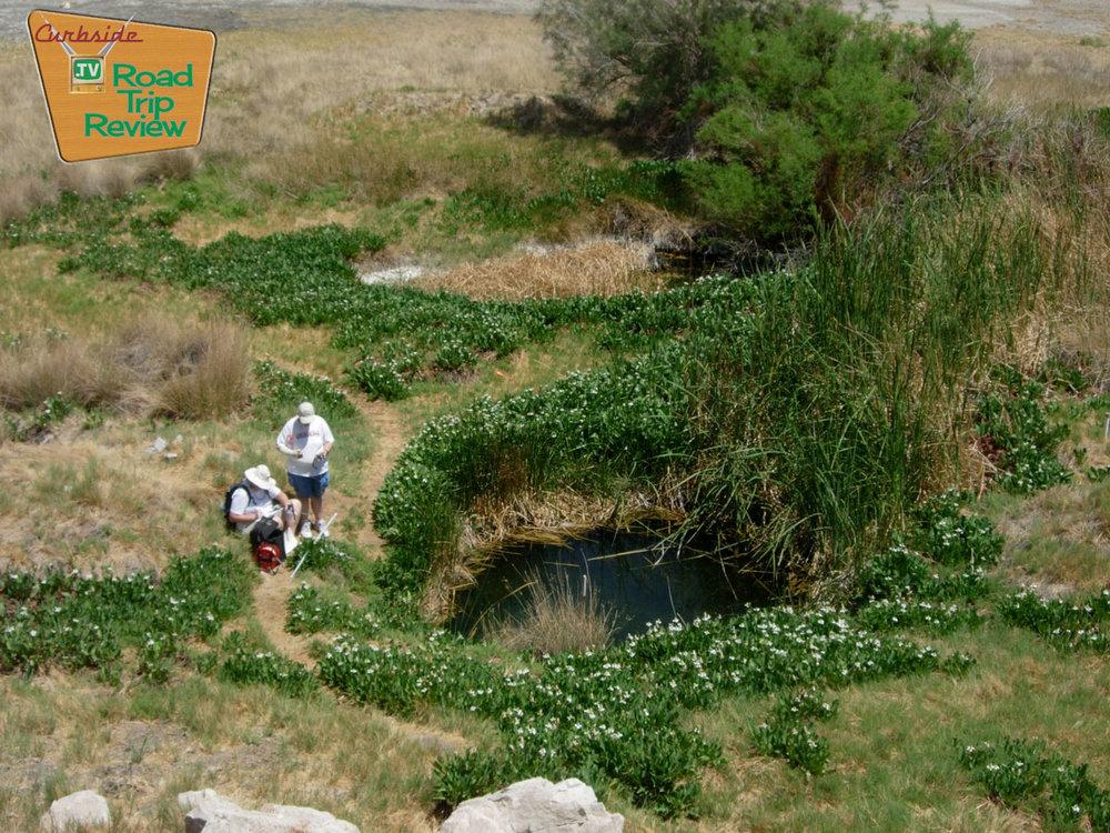Zzyzx-tule-pond-over.jpg
