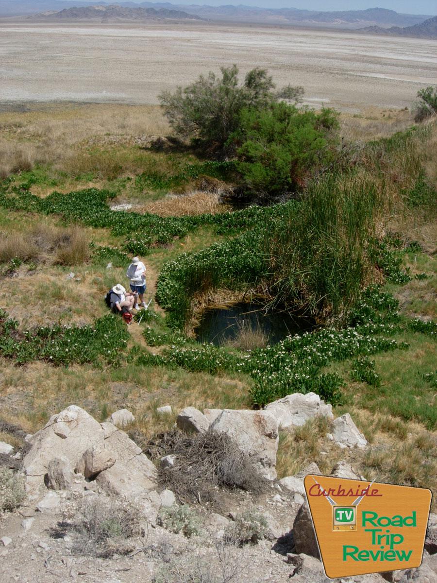 Zzyzx-Tule-Pond-view.jpg
