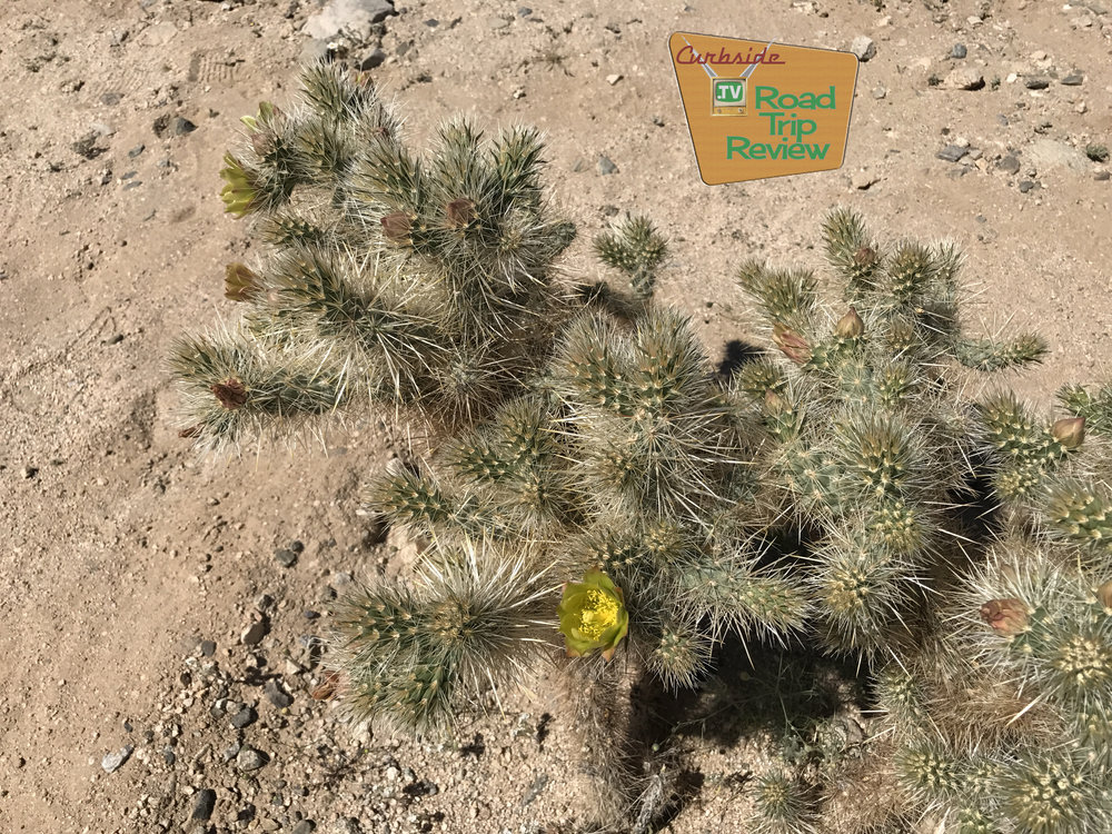 Joshua Tree National Park - 95.jpg