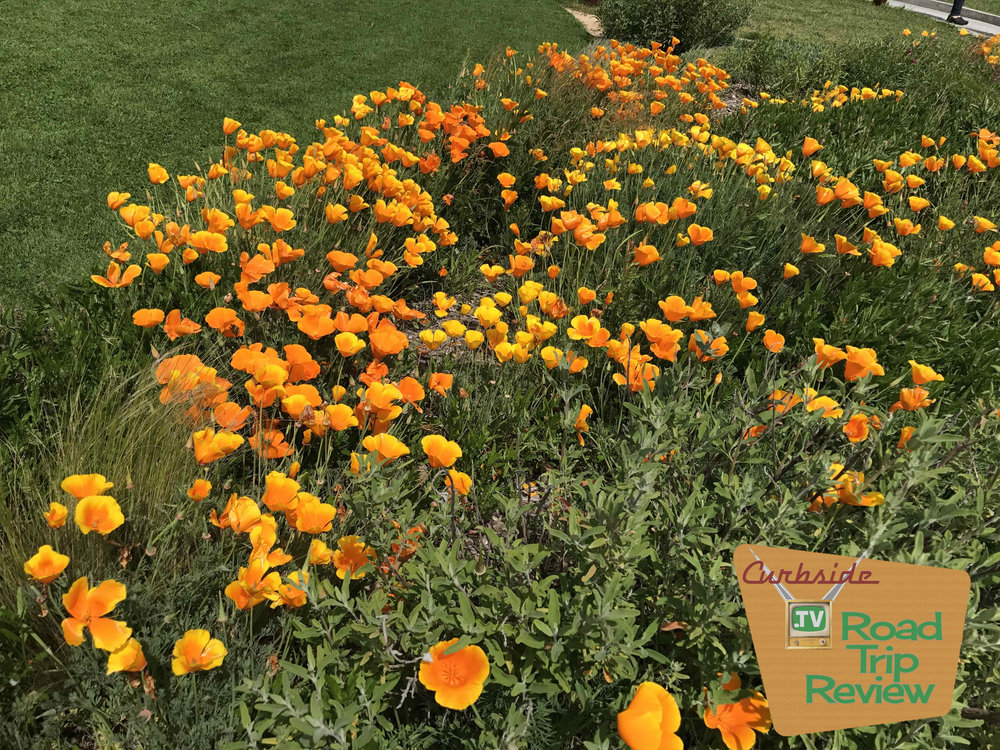 Poppies on the farm
