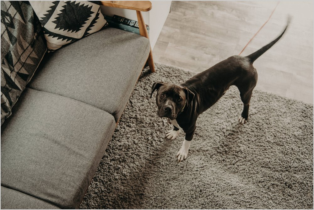 Pike, the pup, looks up to the loft bedroom of this Longmont, Colorado tiny home