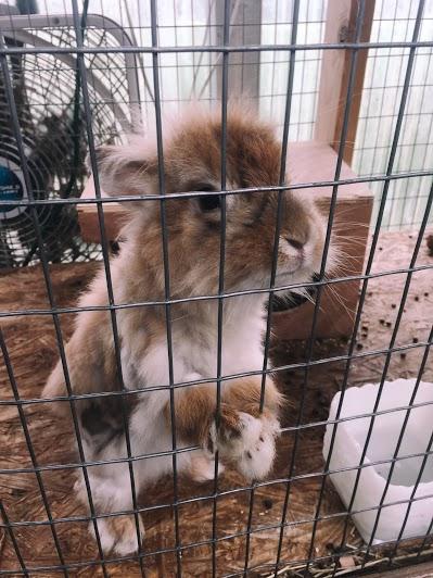 Creative Hoot Design Co + Bunnies!