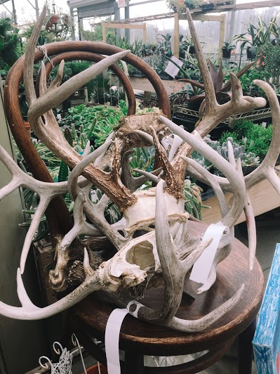 Creative Hoot Design Co + Antlers for sale
