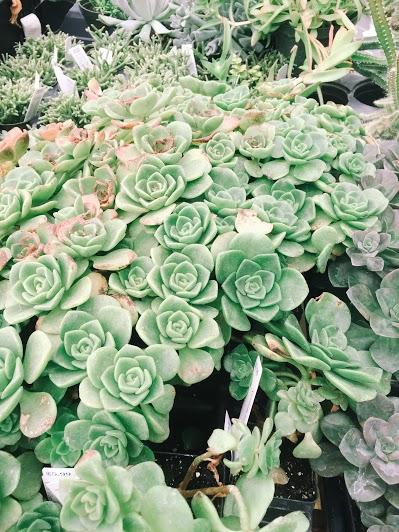 Creative Hoot Design Co + Succulents galore!