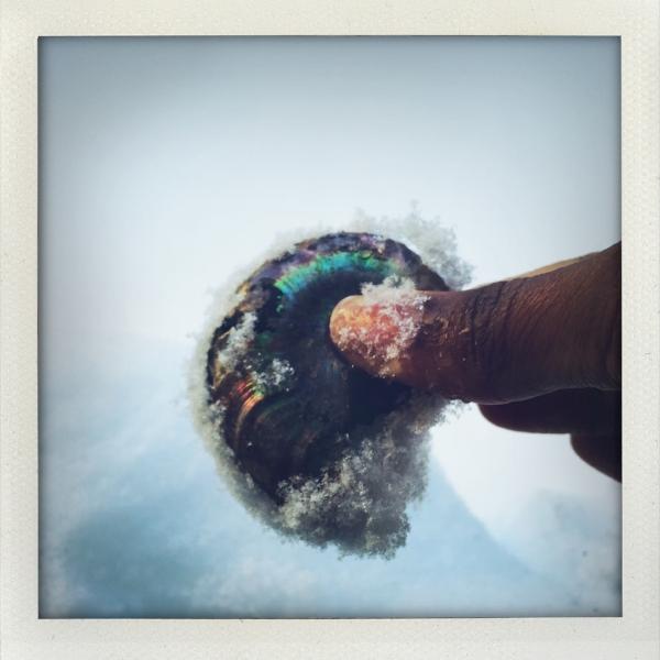 Ammonite Magic
