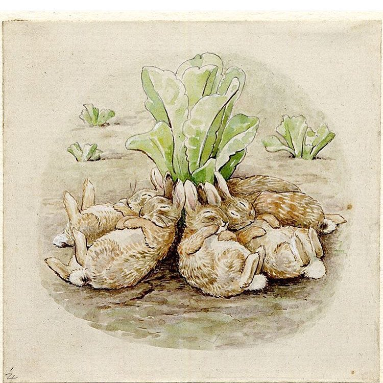 Grew up on this goodness. #Repost @britishmuseum ・・・ Today we're celebrating the work of #BeatrixPotter, born #onthisday in 1866. Her loveable characters and illustrations made her a firm favourite with all ages. This watercolour from her 1909 publication 'The Tale of the Flopsy Bunnies' shows the rabbits asleep around a cabbage plant. #Beatrix150 #bunnies #illustration #🐰 #dreamers #bedtimebunnies #childhood #nostalgia #throwbackthursday (at New York, New York)