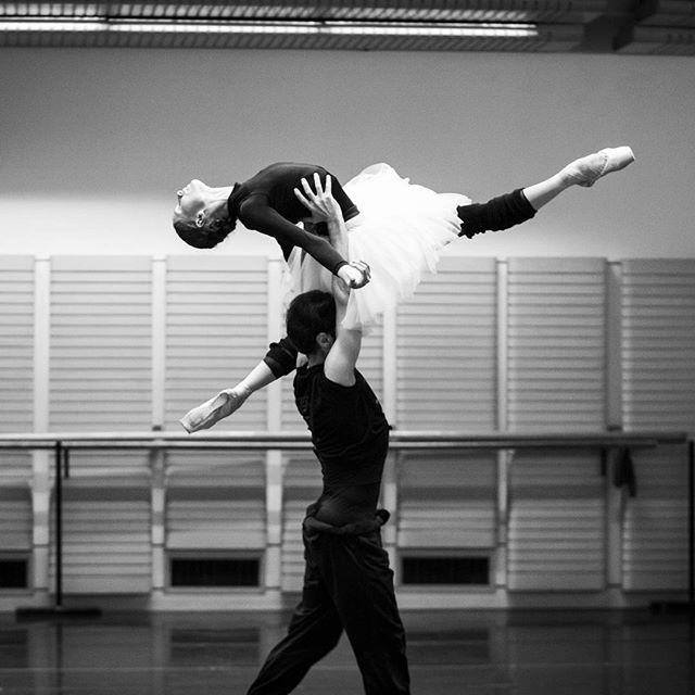 birdasaurus: The Australian Ballet #ballet #dance #beauty