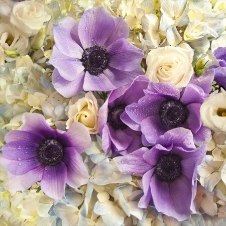 PurpleAnenomes.jpg