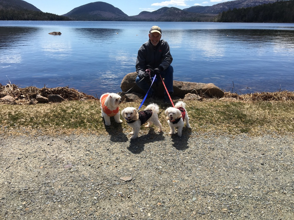 Atleantean's new crew, Linus (center) and Lucy (right), out for fun with their pal Pooka, Inn Dog at Holbrook House B&B