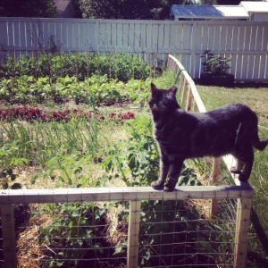 Our garden in Northern Alberta with our guard cat.