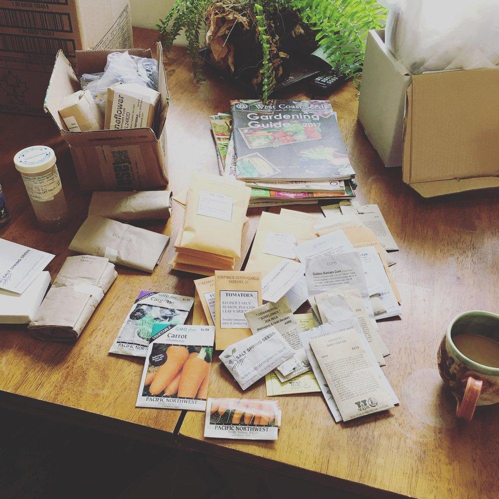 organising seeds.jpg