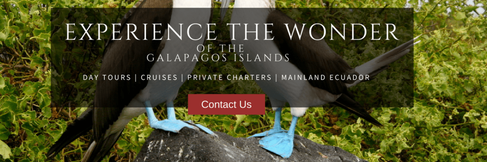 galapagos-islands-tours