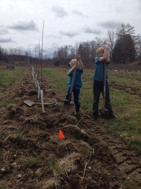 The Redbyrd family planting more orchard this past spring