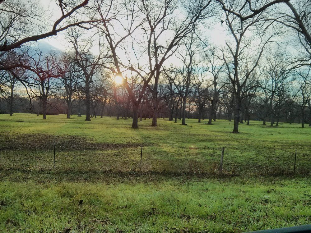 Pecan groves prior to flooding. Photo: Karin Patzke