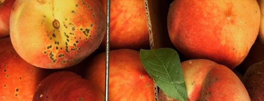 peach banner upick.jpg