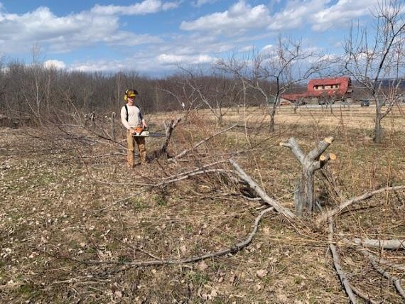 radical pruning.jpg