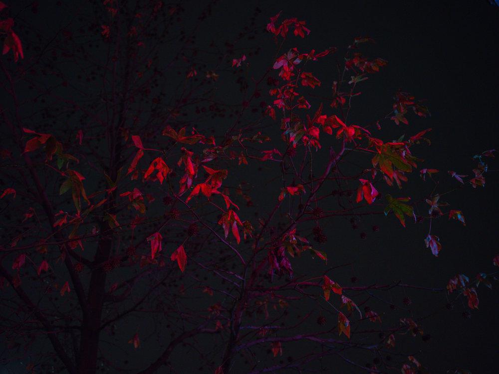 Nick-Johnson-Photography-Leaves-122617-1.JPG