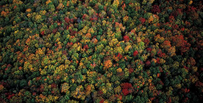 Aerial-view-of-eastern-deciduous-forest-canopy-in-autumn.jpg