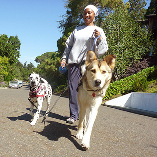 Vanessa doggy lama dog walker and pet sitter