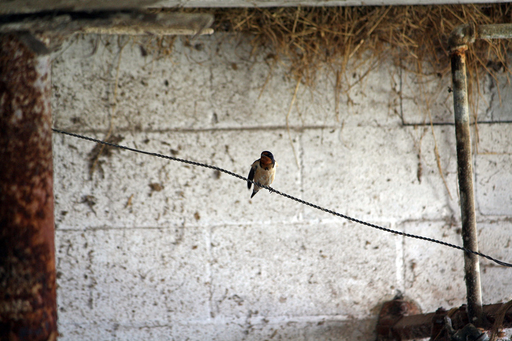 Bird In The Barn