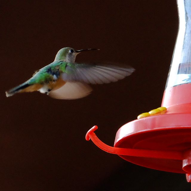 Breakfast with the birds. #hummingbird #naturephotography #birds