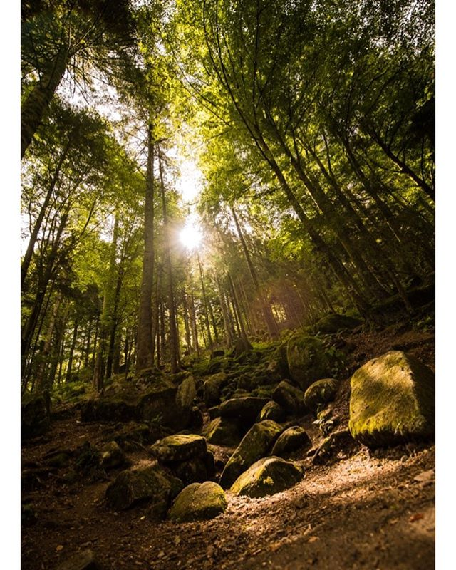 #blackforest #sunset #autumn #sunshine #trees #treestand #rocks #autumn🍁 #fall #germany #germanyphoto #blackforestphotography #nikon #nofilter #d750 #tamron1530