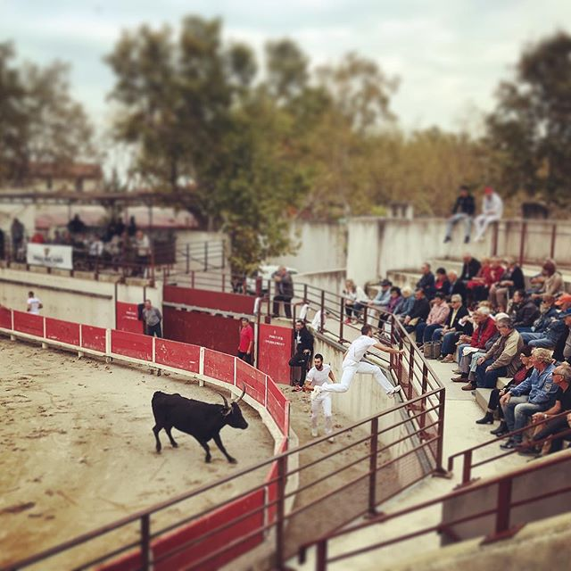 In the Wild West of France, bullfighting is a friendly, not fatal, affair where man and beast are at equal footing. At these Course Camarguaise, nimble raseteurs win points by nabbing strings tied around the bull's horns, jumping like Jordan to avoid his charge. Held at arenas across the Camargue, the ambiance is small-town rodeo meets Spanish corrida, with townsfolk coming together to celebrate the region's iconic white horses and 🐂. A tradition not to be missed... . . . . #france #camargue #coursecamarguaise #bull #bullfighting #taureau #manade #cowboy #tradition #raseteur #festival #gard