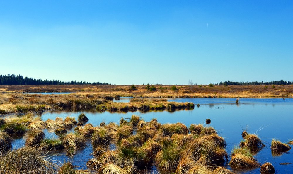 "Pictured is a Peat bog inthe moors of Europe  If you want ""moor"",  that is   more  weird and wonderful medicine posts - please let me know in the Comment Section below."
