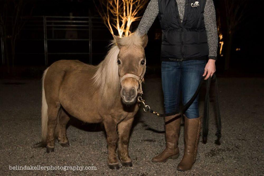 mini horse cedarbrook.jpg