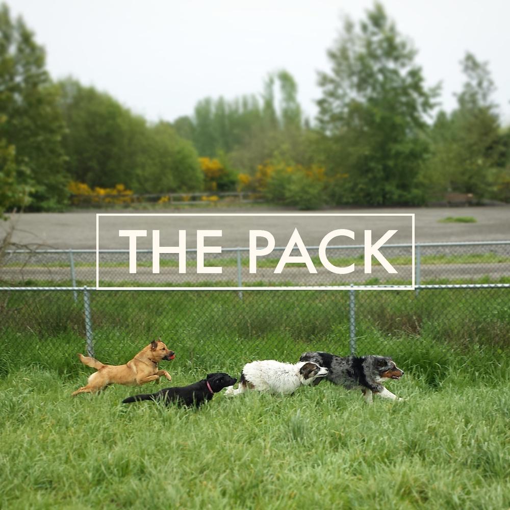 ThePack.jpg