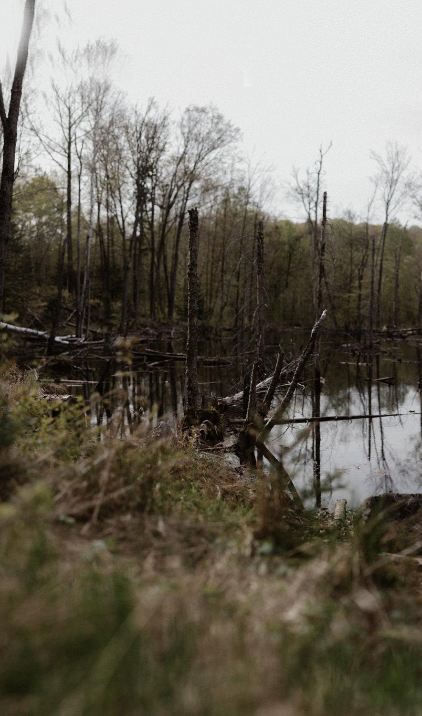Pêche 2018 Full hd yanick lespérance outaouais peche aventure chasse lac forêt  (23 of 104).jpg
