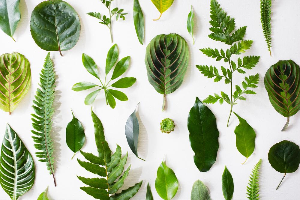 PlantLibrary-66-FINALweb.jpg