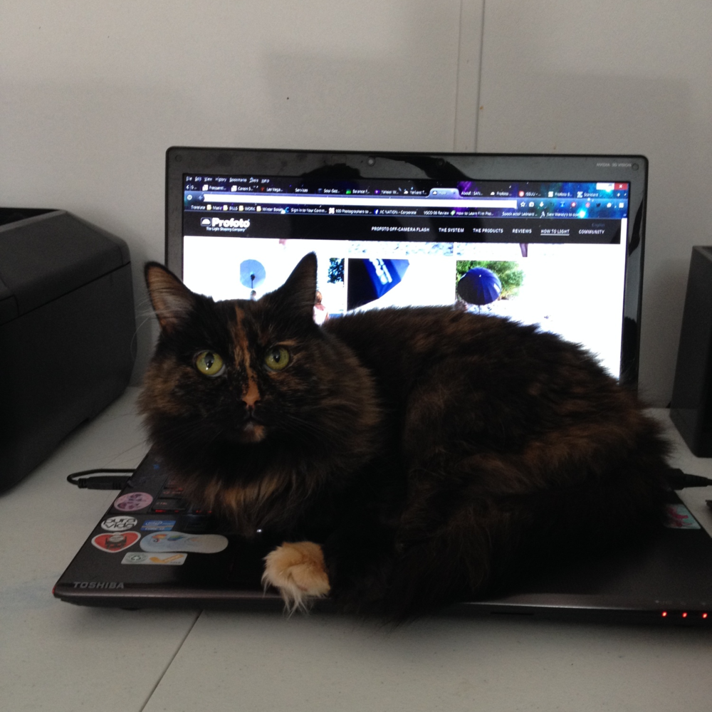Spica-Cat-on-my-keyboard
