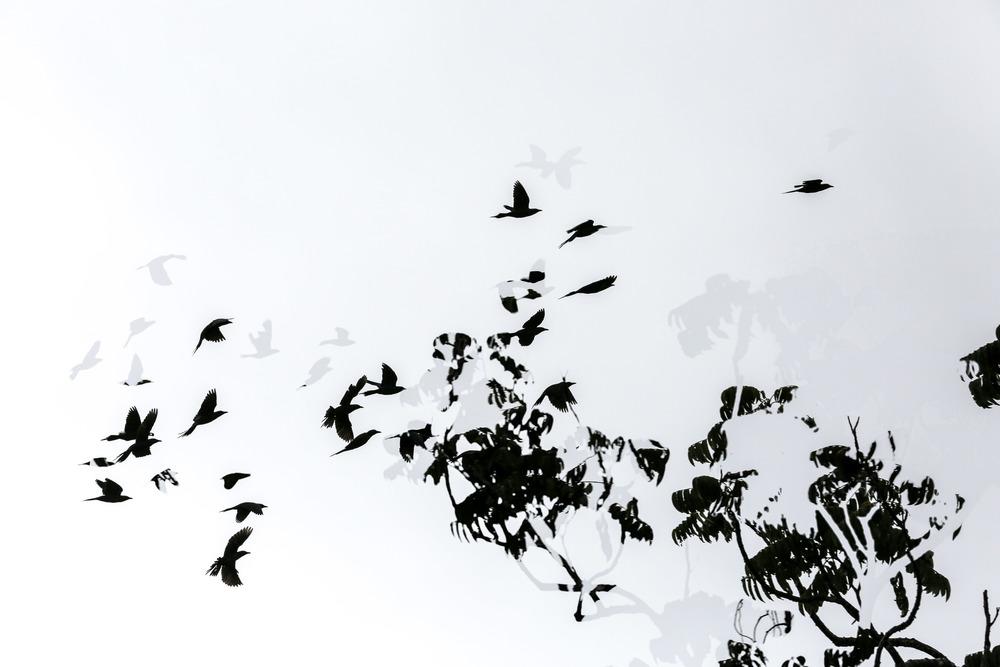 Birds of the Daintree Rainforest