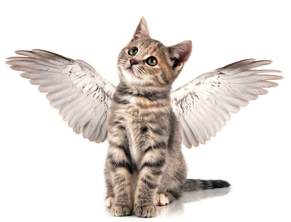 winged cat.jpg