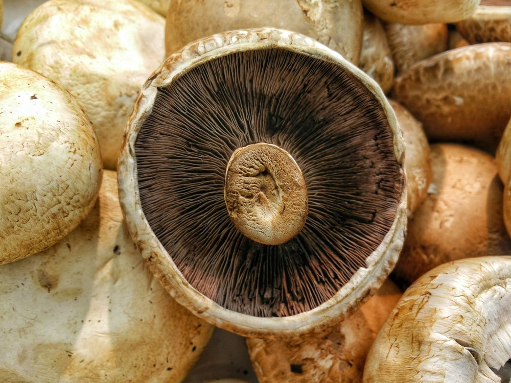 how_to_cook_mushrooms_quick_vegan_recipes_for_mushrooms_health_benefits_of_mushrooms_nutrients_in_mushrooms_vegan_nutrition.jpg