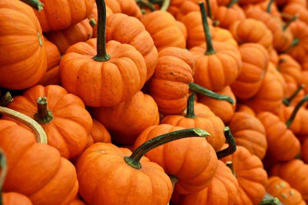 tips_for_a_vegan_thanksgiving.jpg