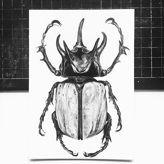 I drew a beetle for my Mum💖 🐜(