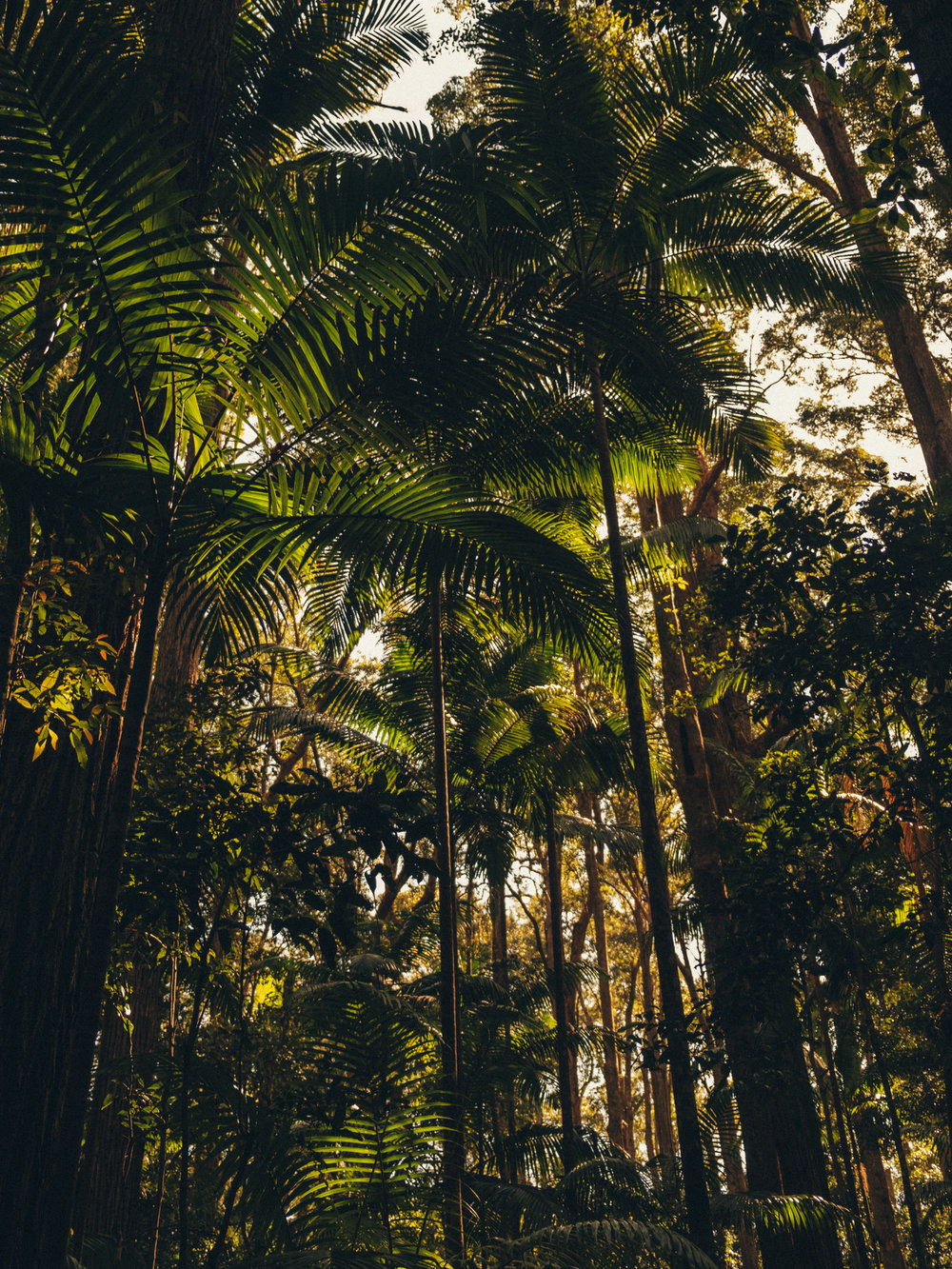 Sub-Tropical Forest on Fraser Island