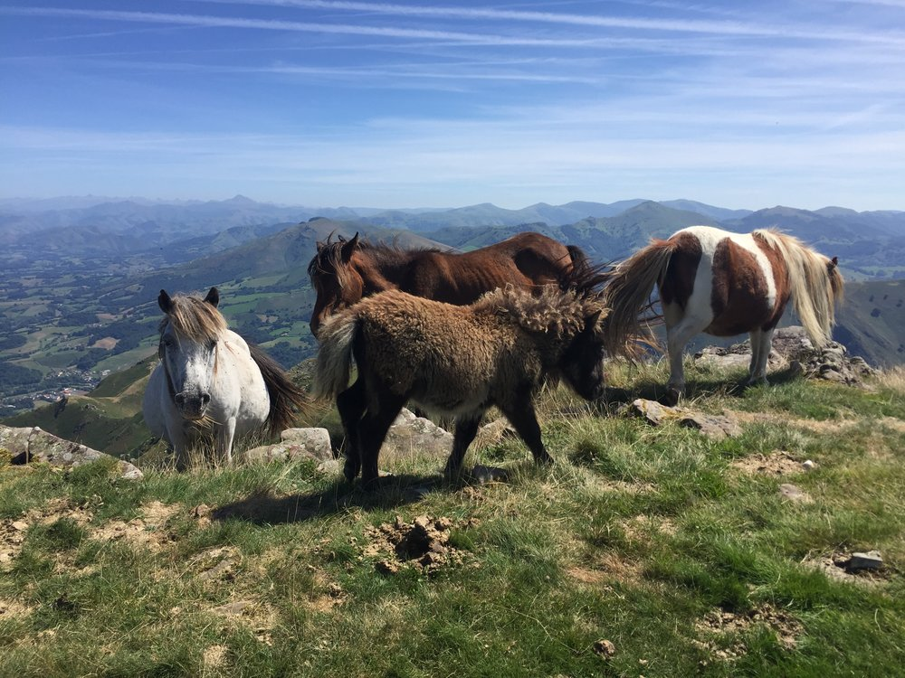 Wild horses on top of the mountain