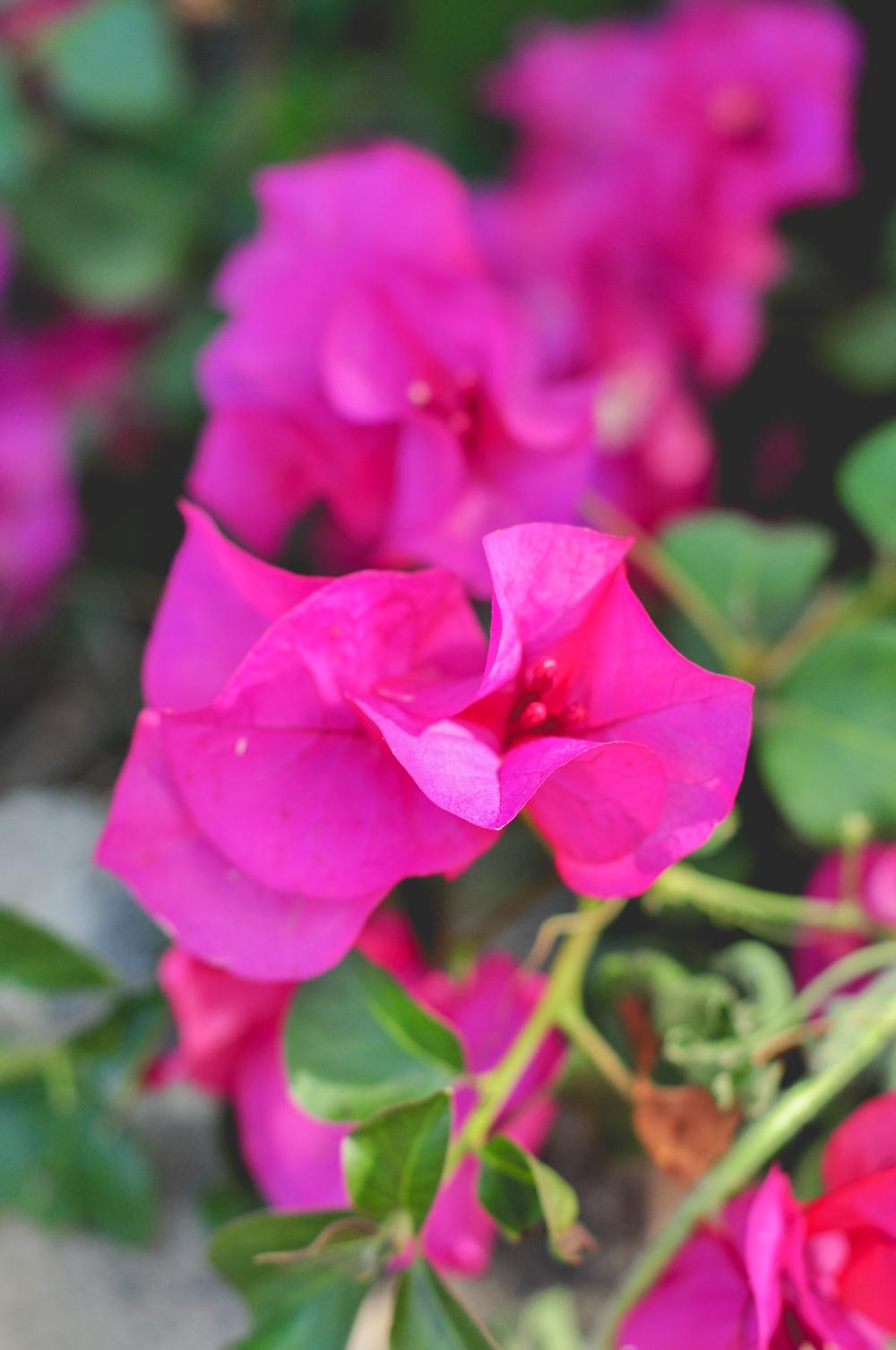 Lake Naivasha flowers_Hannah Teague Photography