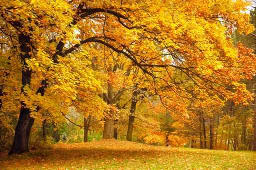 activités en automne au Domaine d'Ablon Normandie