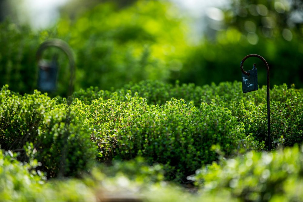 jardin des simples Domaine d'Ablon Normandie