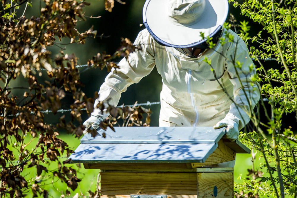 domainedablon_ruche_abeilles©stephaneleroy-23.jpg