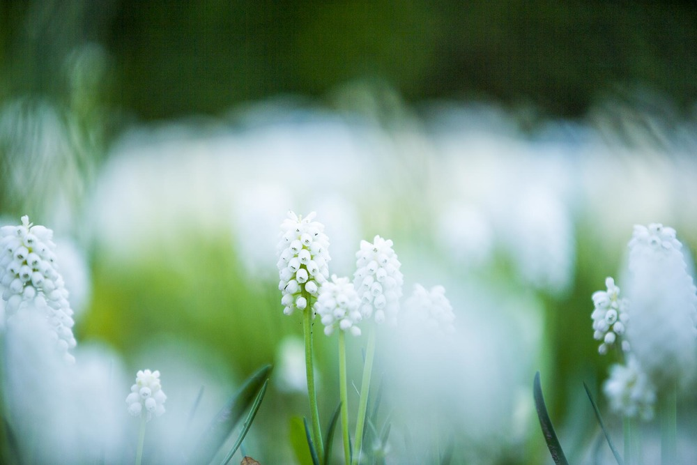 domainedablon_exterieurs_printemps©stephaneleroy-3816.jpg