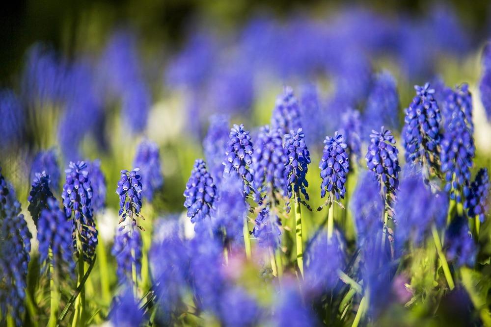 domainedablon_exterieurs_printemps©stephaneleroy-3806.jpg